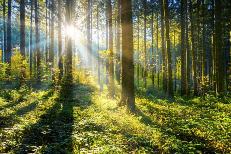 Alternative Geldanlage: in Wald investieren